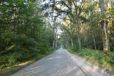 """Na zdjęciu widać drogę gminną z tzw. """"kocich łbów"""" i otaczające ją lasy"""