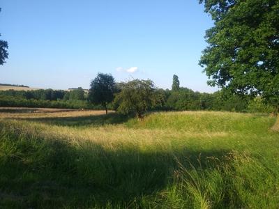 Zdjęcie przedstawia łąkę i drzewa na terenie Gminy Zawonia