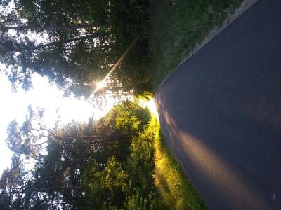 Zdjęcie przestawia drogę i otaczający ją las na terenie Gminy Zawonia