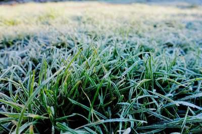 Na zdjęciu widać szron na trawie