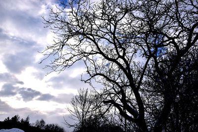 Na zdjęciu widać gałęzie drzewa