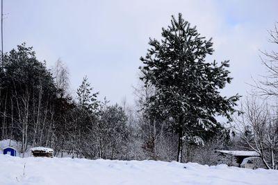 Na zdjęciu widać łąkę oraz drzewa pokryte śniegiem