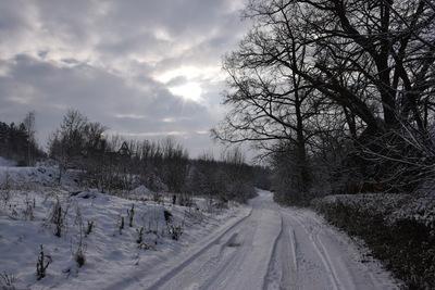 Na zdjęciu widać polną drogę oraz drzewa pokryte śniegiem