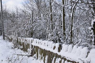Na zdjęciu widać płot oraz drzewa pokryte śniegiem