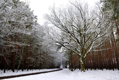 Na zdjęciu widać drogę prowadzącą do Pęciszowa oraz drzewa pokryte śniegiem