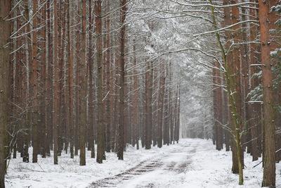 Na zdjęciu widać drogę leśną oraz drzewa pokryte śniegiem