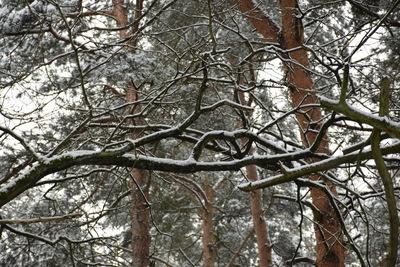 Na zdjęciu widać gałęzie drzew pokryte śniegiem