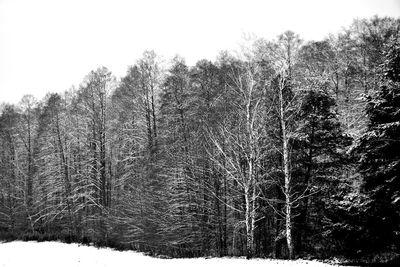 Na czarno-białym zdjęciu widać drzewa pokryte śniegiem