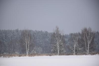 Na zdjęciu widać łąkę i drzewa pokryte śniegiem