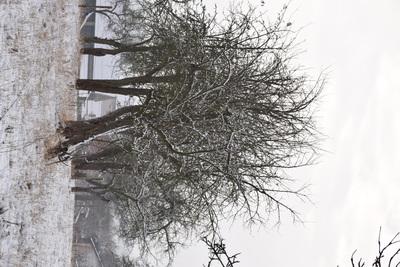 Na zdjęciu widać drzewka owocowe pokryte śniegiem