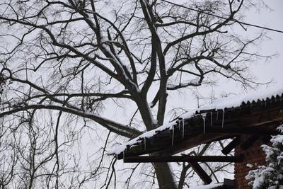 Na zdjęciu widać drzewo o pokryte śniegiem oraz dach i sople
