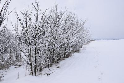 Na zdjęciu widać drzewka owocowe i łąkę pokryte śniegiem