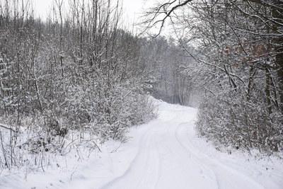 Na zdjęciu widać drogę oraz drzewa pokryte śniegiem