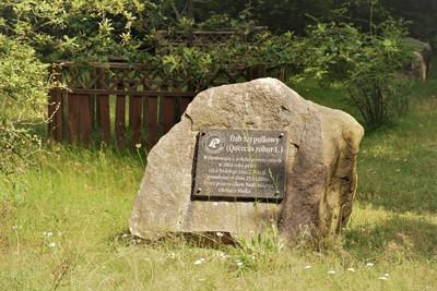 Na zdjęciu widać pomnik upamiętniający zasadzenie dęba szypułkowego