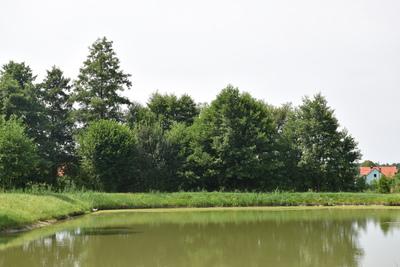 Na zdjęciu widać staw w Trzęsawicach