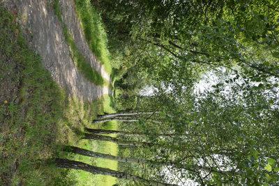 Na zdjęciu widać leśną ścieżkę i drzewa