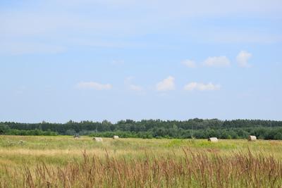 Na zdjęciu widać pola uprawne, łąkę i las