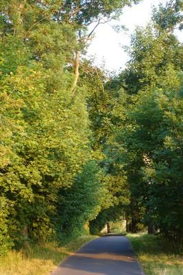 Na zdjęciu widać drogę gminną prowadzącą do Cegielni i okalające ją drzewa