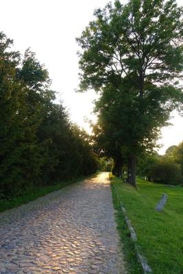 Na zdjęciu widać drogę prowadzącą w dół Skotnik i okalające ją drzewa
