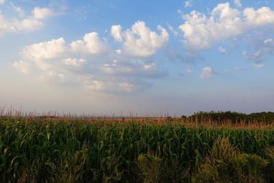 Na zdjęciu widać pola uprawne w Gminie Zawonia