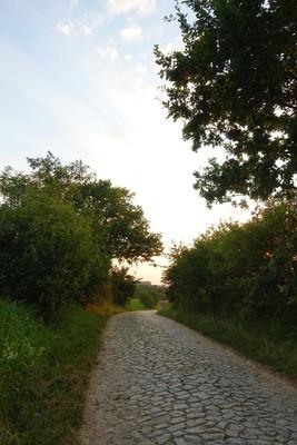 Na zdjęciu widać  drogę gminną i okalającą ja drzewa