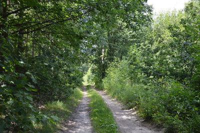 Na zdjęciu widać polną drogę w lesie na terenie Gminy Zawonia