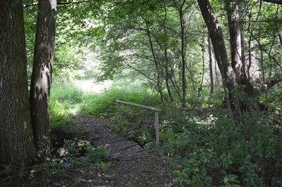 Na zdjęciu widać drzewa w lesie oraz polną drogę na terenie Gminy Zawonia