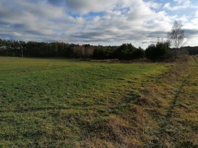 Na zdjęciu widać w tle las, łąki oraz polną drogę  na terenie Gminy Zawonia
