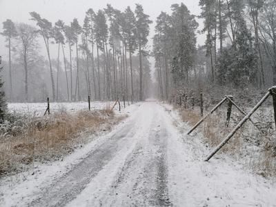 Na zdjęciu widać polną drogę w lesie oraz las pokryty śniegiem