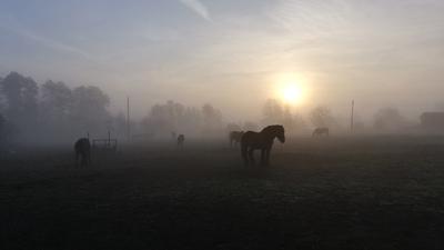 Na zdjęciu widać wschód słońca i konie oraz mgłę