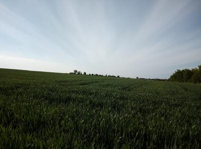 Na zdjęciu widać obsiane pole, błękitne niebo