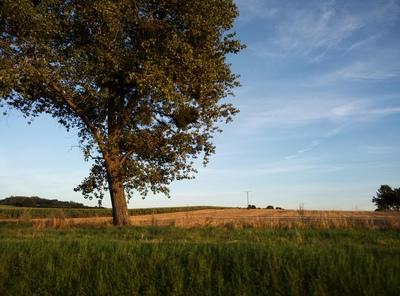 Na zdjęciu widać drzewo, a w tle niebo i pola uprawne