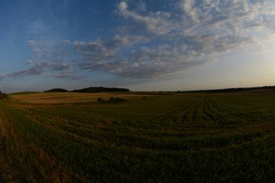 Zdjęcie przedstawia pola rolnicze na terenie Gminy Zawonia