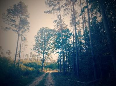Na zdjęciu widać polną drogę w lesie w Niedarach