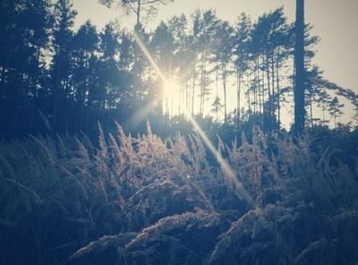 Na zdjęciu widać las w Niedarach