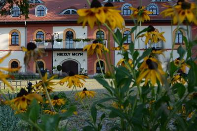 Na zdjęciu widać żółte kwiaty - rudbekie, zaś w tyle Hotel Niezły Młyn w miejscowości Czeszów