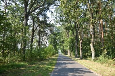 Na zdjęciu widać drogę gminną w lesie